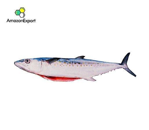 SERRA (Scomberomoru brasiliensis) - Amazon Export