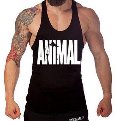 Regata Animal