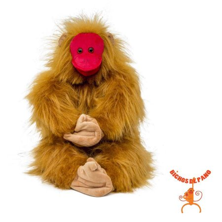 Macaco da Cara Vermelha