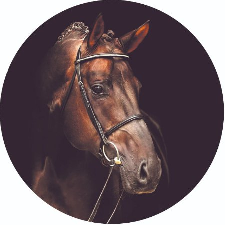 Capa Personalizada para Estepe Ecosport Crossfox Cavalo