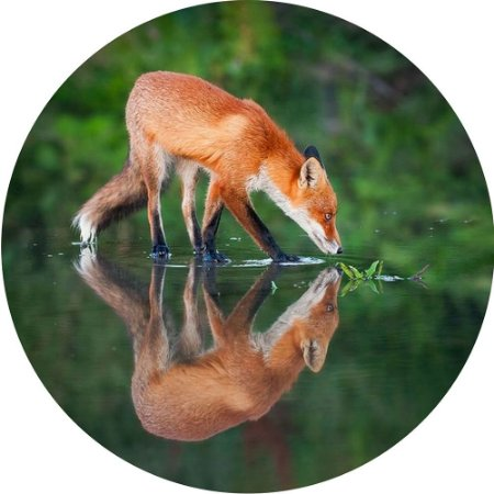 Capa para Estepe Pneu Personalizada Especial Crossfox + Cabo + Cadeado Fox Raposa 2