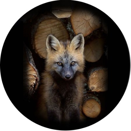 Capa para Estepe Pneu Personalizada Especial Crossfox + Cabo + Cadeado Fox Raposa 7