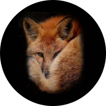Capa para Estepe Pneu Personalizada Especial Crossfox Fox Raposa 8
