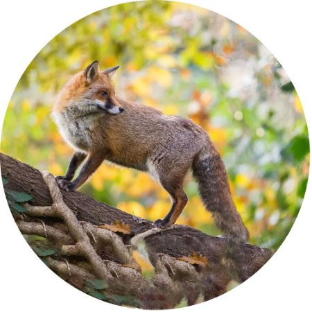 Capa para Estepe Pneu Personalizada Especial Crossfox + Cabo + Cadeado Fox Raposa 11
