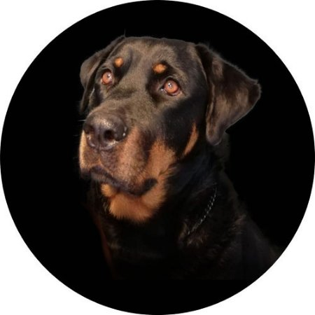 Capa para estepe Ecosport Crossfox + Cabo + Cadeado Rottweiler Maya