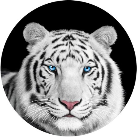 Capa Personalizada para Estepe Ecosport Crossfox Tigre Olhos Azuis