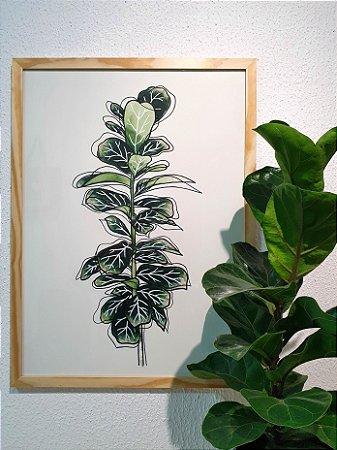 Quadro Feito a Mão (63x47cm) - Ficus Lyrata
