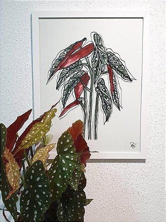 Quadro Feito a Mão (48x37cm) - Begônia Maculata