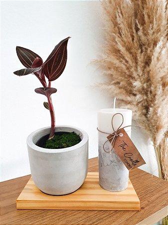 Kit Presente| Vela + Cachepot + Planta + Porta Vaso em Madeira