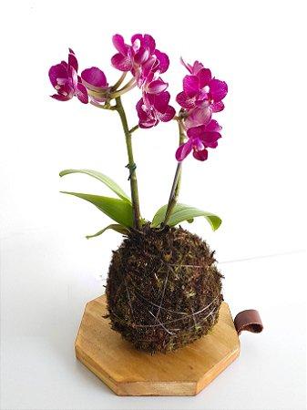 Kokedama com suporte em madeira | Orquídea