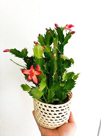 Flor de Maio | Pote Pequeno