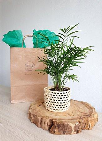 Presente Palmeira + Cesto em Fibra