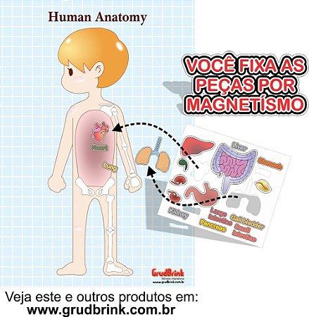 Cartaz Para Sala De Aula Órgãos do Corpo Humano