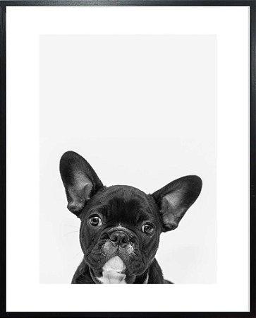 Quadro Cara de Cachorro - Quadrum & Art
