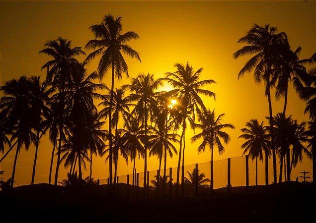 Belo pôr do sol dourado com coqueiros