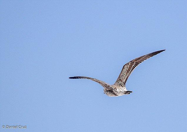 Céu azul com bela ave