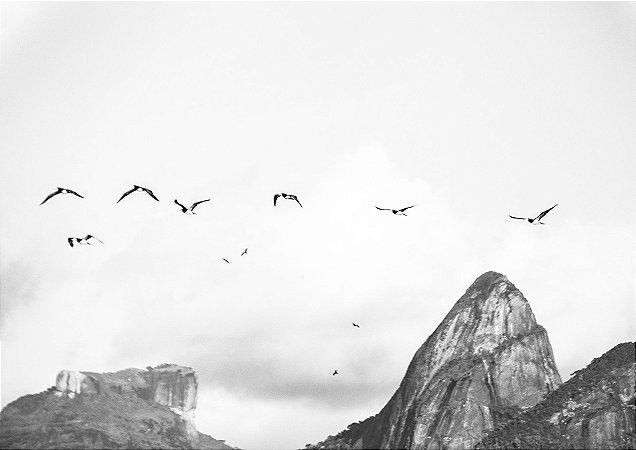 Aves voando com momento ao fundo em preto e branco