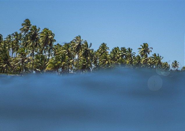 Fotografia aquática com coqueiros ao fundo