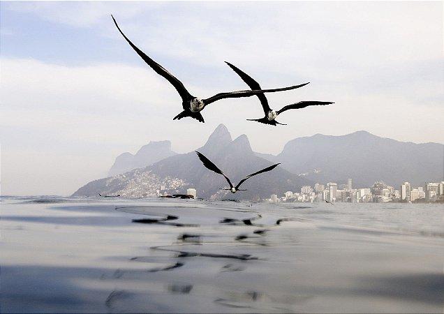 Aves sobrevoando o mar em clima nublado