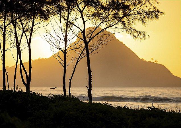 Natureza contrastando em uma linda golden hour