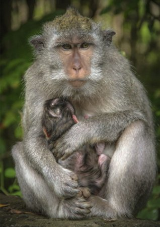 Mother protect