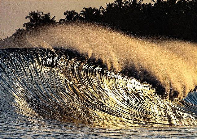Golden barrel - Nias