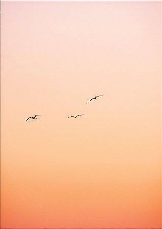 Dança das gaivotas