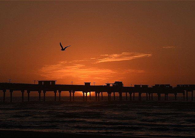 Nascer do sol com um pássaro a voar - Balneário Rincão