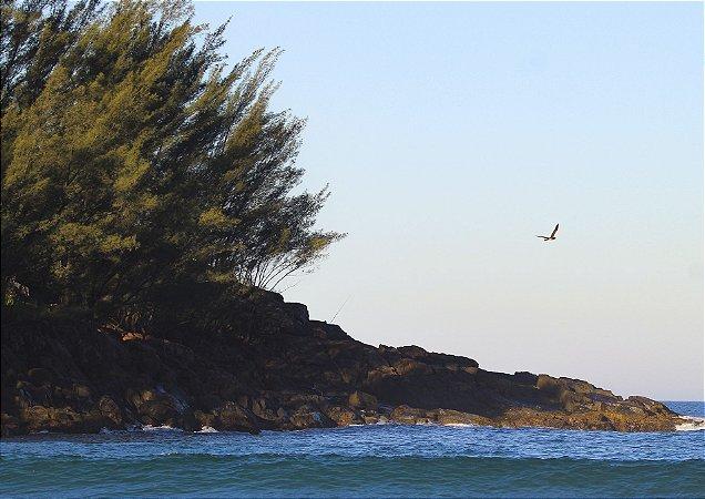 Bird and rocks - Ferrugem