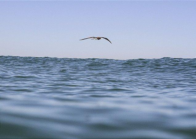 Gaivota voando sobre o mar azul