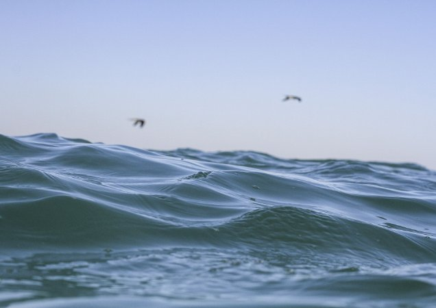 Detalhe do mar com duas gaivotas no fundo