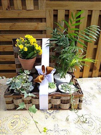 Baú de Plantas Cultivando o Amor