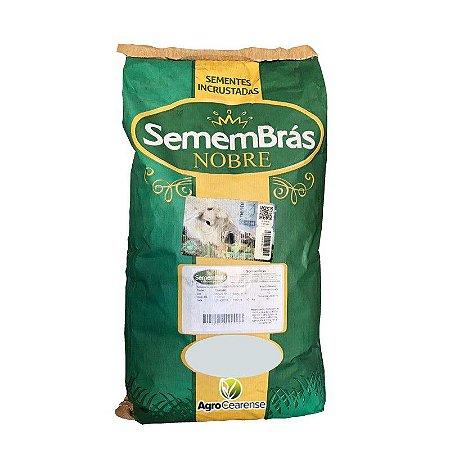 Capim Mombaça Semembras vc80% (Sementes Incrustadas) - Saco com 10kg
