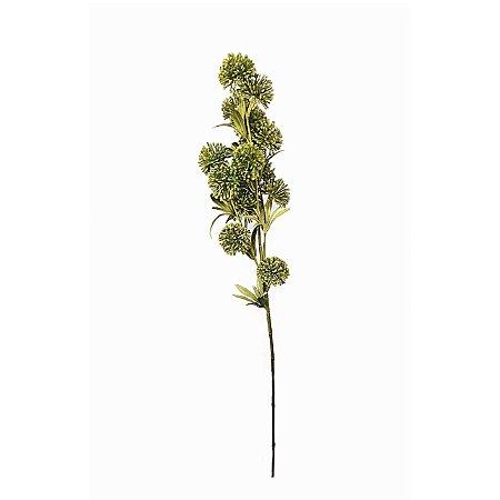 Haste de Allium - Verde
