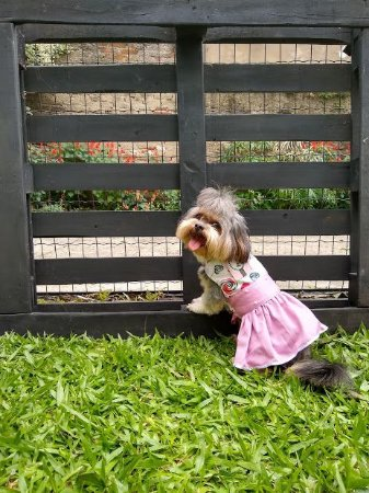 Vestido Cinto Alto Mima Pet c/ Aplique