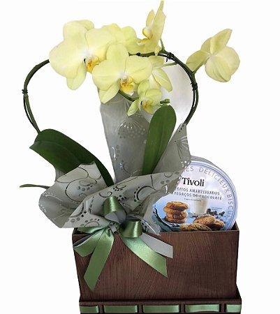 Orquídea Coração no Caixote