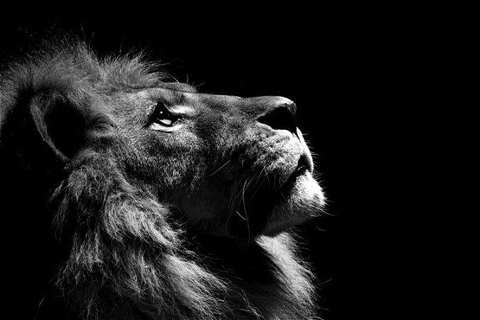 Quadro Leão de Judá - Preto e Branco