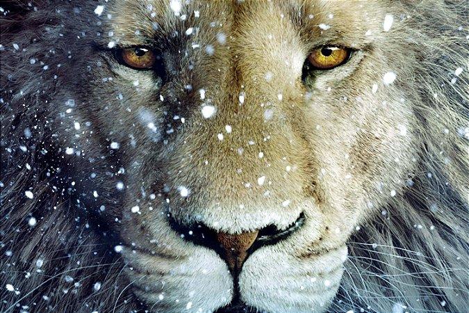 Quadro Leão - Inverno