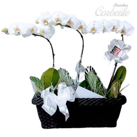 Jardim das Orquídeas Brancas com 3 hastes