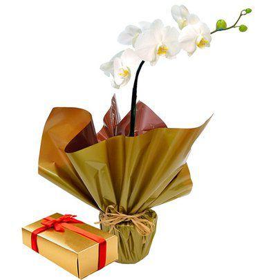 Orquídea branca Phalaenopsis  plantada e caixa de bombom