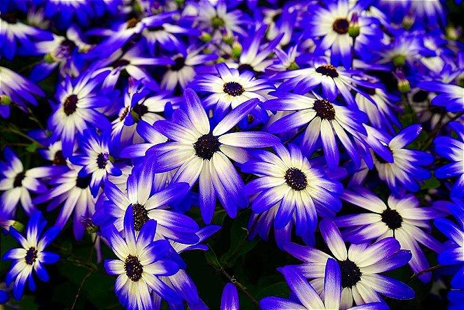Painel de Festa em Tecido Sublimado 3d Lindas Flores Azuis