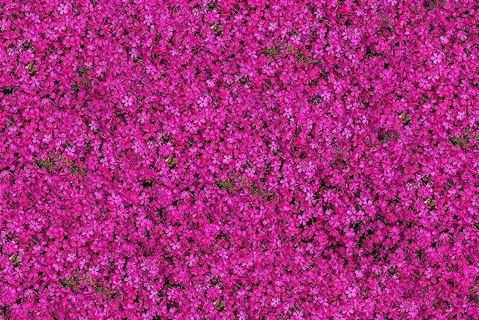 Painel de Festa em Tecido Sublimado 3d Muro de Flores Lilases