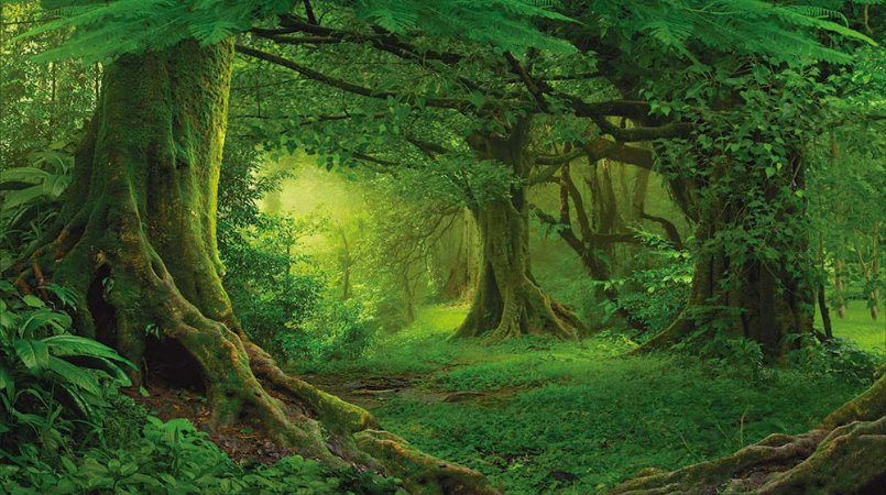 Painel de Festa em Tecido Sublimado 3d Floresta Escura