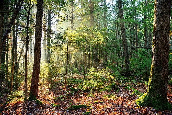 Painel de Festa em Tecido Sublimado 3d Raio de Sol na Floresta