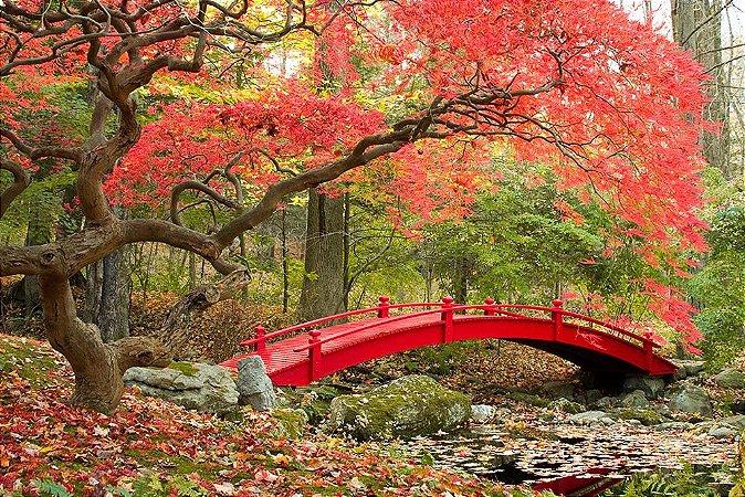 Painel de Festa em Tecido Sublimado 3d Jardim Japonês