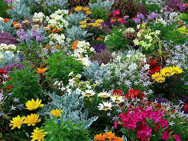 Painel de Festa em Tecido Sublimado 3d Jardim Botânico