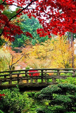 Fundo Fotográfico em Tecido Sublimado Ponte no Jardim