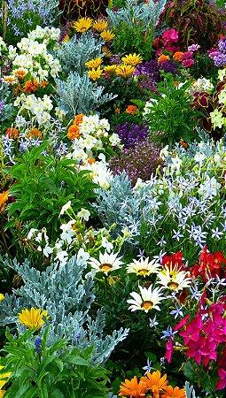Fundo Fotográfico em Tecido Sublimado Jardim Botânico
