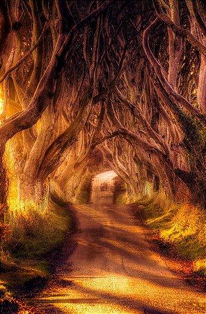 Fundo Fotográfico em Tecido Sublimado Floresta no Outono