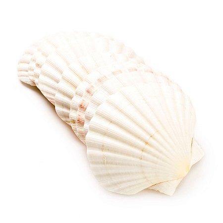 Concha Shell Branca - Unidade